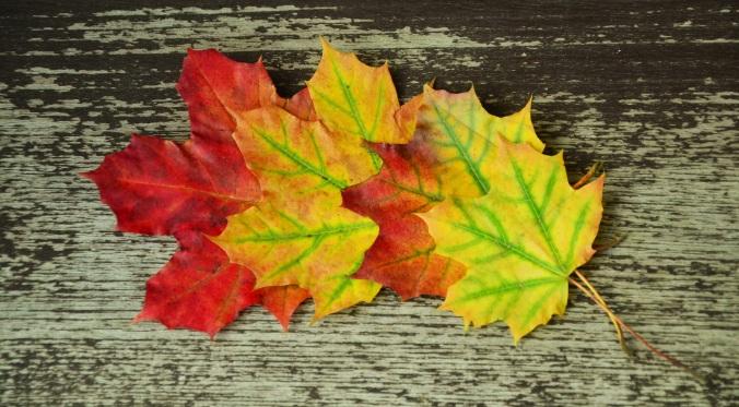 fall-foliage-972737